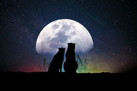 Two cats in the moon