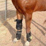 Red light therapy on horse's legs