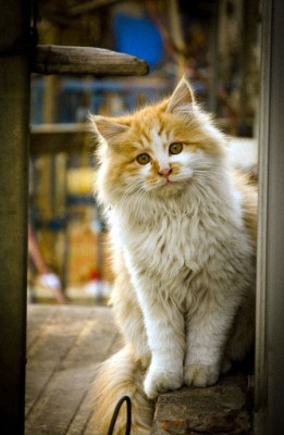 """Allergy Cat Says """"I'm sorry you're allergic to me."""""""