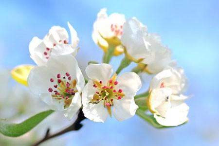 Beautifu flowers, dangerous pollen